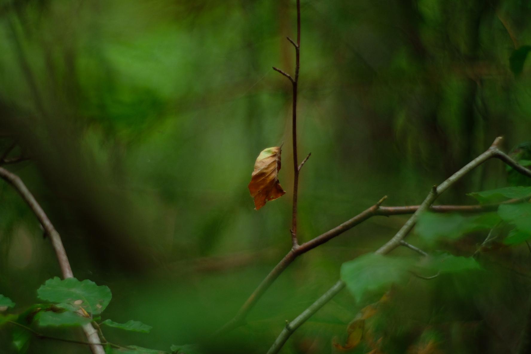 Vergänglichkeit in der Natur beobachtet