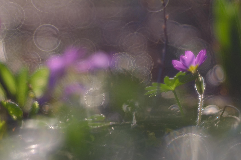 Natur - Blumen