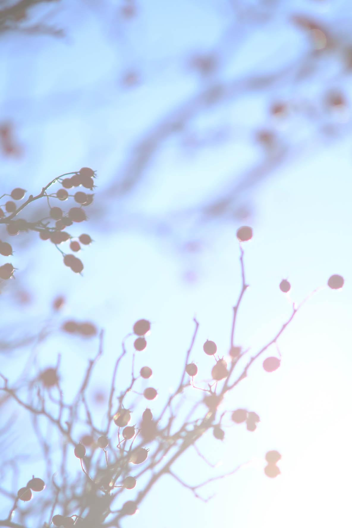 Lichtspiele & Täumereien