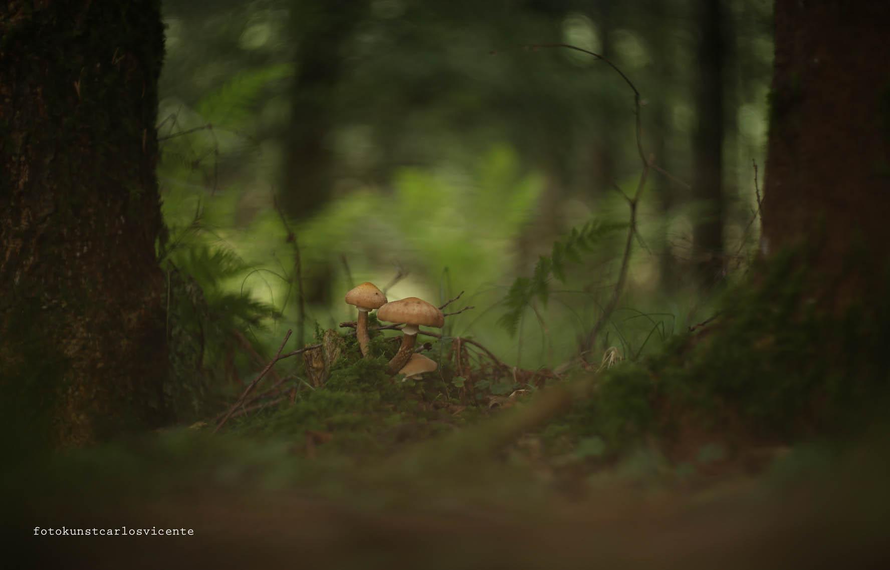 Naturfotografie - Pilze