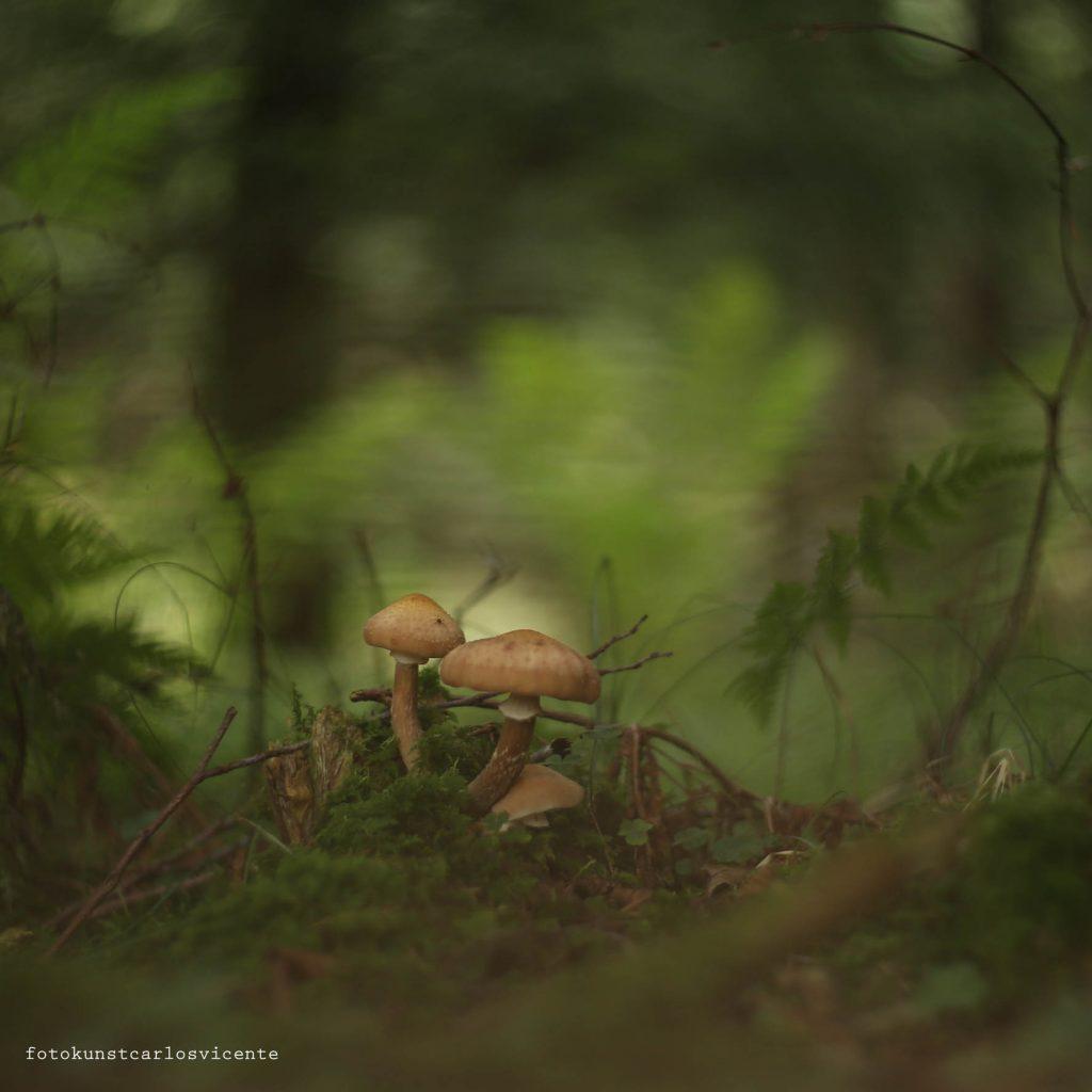 Natur - Pilze