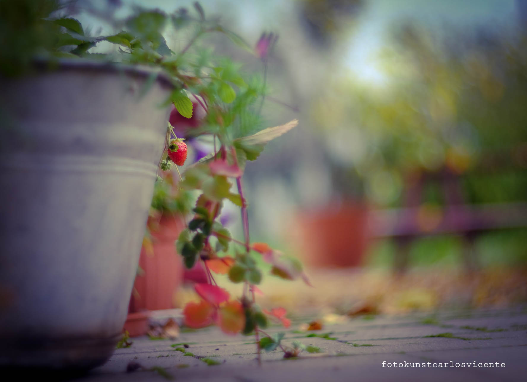Blumen und Buntes
